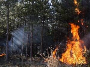 Пожарът в Сакар обхвана 5000 дка
