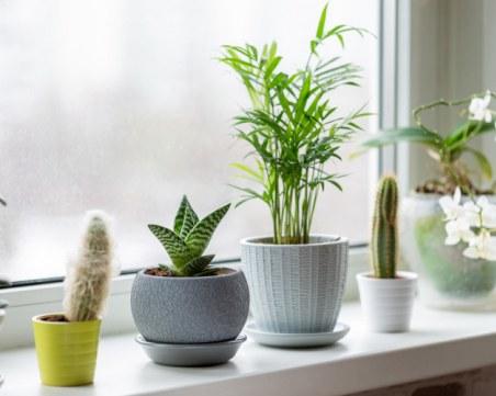 Как да спасим умиращо растение у дома