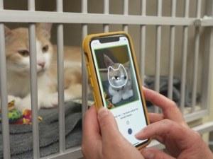 Мобилно приложение разчита емоциите на котките