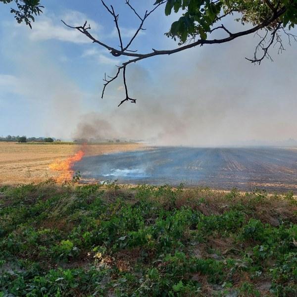 Огънят край Марица е овладян, кметът на Родопи благодари за бързата намеса
