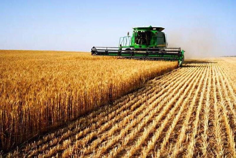 Официално: До 20 август се забранява поддържането на затревените площи и обработваемите земи