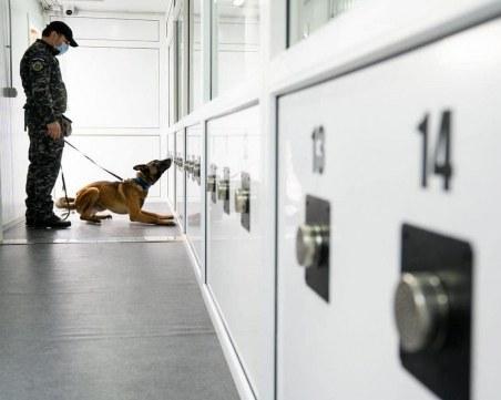 Куче засече заразен с COVID-19 на летище в Румъния
