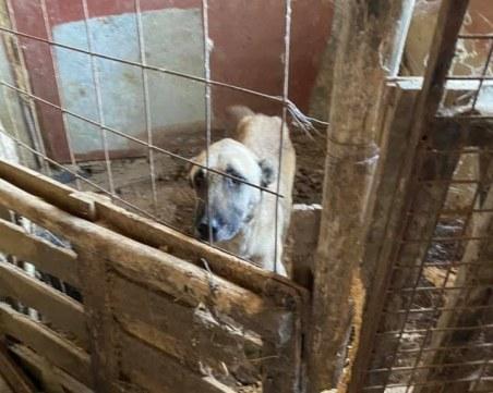 Поредната жестокост: Откриха мъртви и недохранени кучета в Ямболско