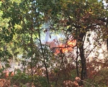 Горски пожар бушува над Разлог