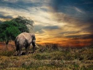 """""""Слонът, моят приятел"""" или какво не знаем за величественото животно"""