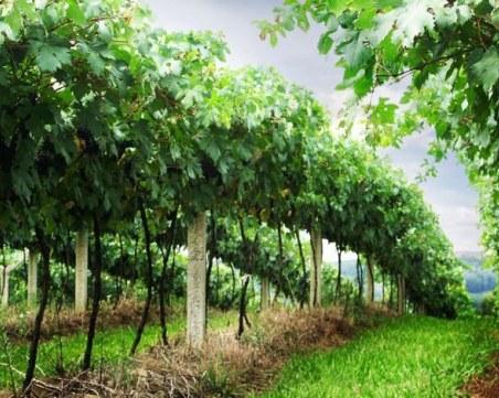 Разбиха група, вкарвала нелегално нископлатени гроздоберачи от България за Франция