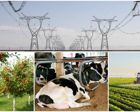 Български производители: Държавата да се намеси спешно, цената на храната ще продължава да расте