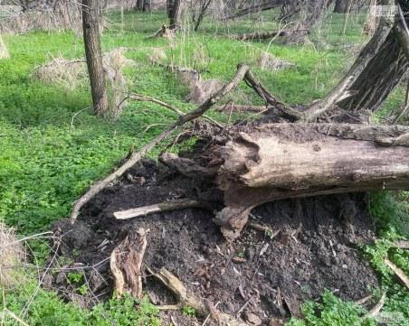 Инж. Георги Николаев: 50% от дърветата в Лаута са болни, реанимацията на парка не бива да се отлага