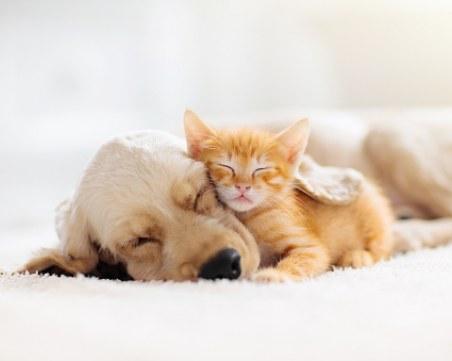 На този ден: Световен ден за защита на животните