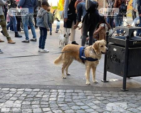 Пловдивчани осиновяват бездомни кучета
