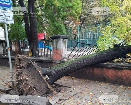 Дърво се стовари върху оградата на Музикалното училище в Пловдив
