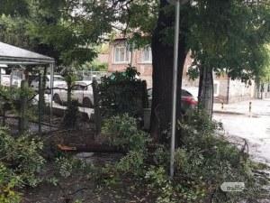 Втори инцидент в Пловдив: Клон падна до училище в Смирненски
