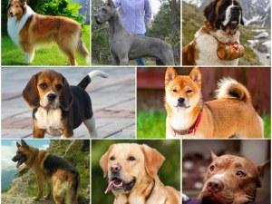 Скритите послания: Коя порода куче е най- подходяща за вашата зодия