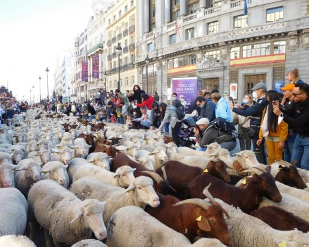 Хиляди овце и кози дефилираха в центъра на Мадрид